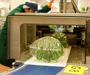 Van Dijck Groenteproducties.Home Van Dijck Groenteproducties